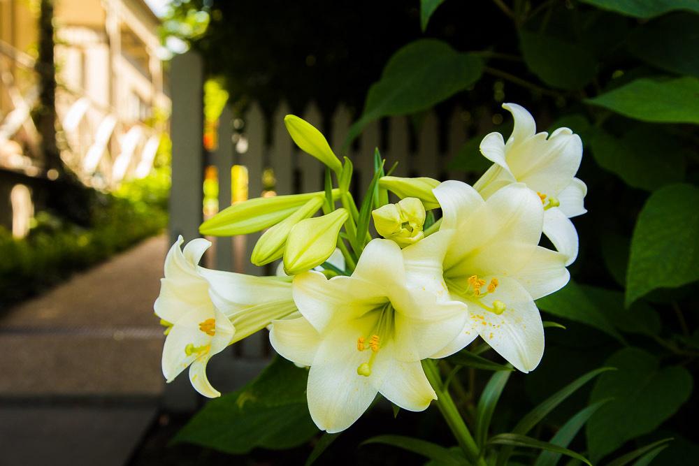 Alphington garden-071